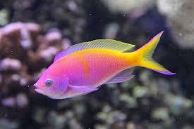 Resultado de imagen de fish