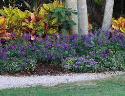 15 Best <b>Flowers</b> for <b>Summer</b> | Costa Farms