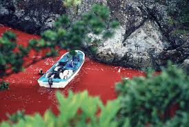 Image result for taiji cove