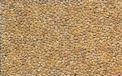"""Résultat de recherche d'images pour """"millet brun"""""""
