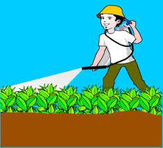 Image result for Jenis tanaman dan cara pembuatan Pestisida Organik
