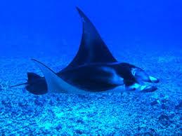 Resultado de imagen para imagenes del fondo del mar reales