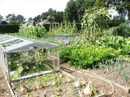 Image result for vegetable garden