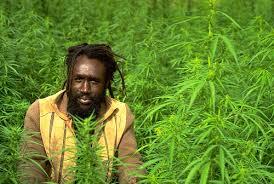 Image result for ganja weed images