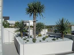 Dragon <b>Trees</b> Australia | Architectural <b>Plants</b> for Landscape <b>Design</b> ...