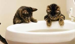 Какой <b>наполнитель для кошачьего туалета</b> лучше. Виды ...