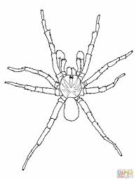 Small Picture Halloween Adult Coloring Page Spider Web The Very Busy Literacy