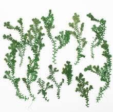 Online Get Cheap Herbarium Flowers Plants -Aliexpress.com ...