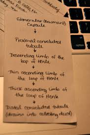 beauty love and being a nursing student so you want to be a you want your flashcards simple and sweet