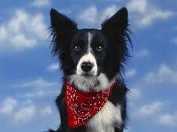 Χειροποίητο κολάρο για σκύλους...
