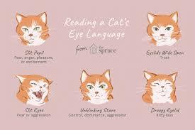 Reading the <b>Eyes</b> of Your <b>Cat</b>