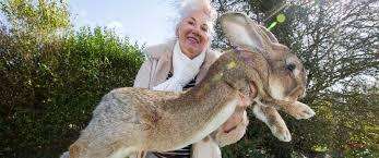 Image result for rabbit Annette Edwards