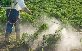 """Résultat de recherche d'images pour """"intoxication pesticide"""""""
