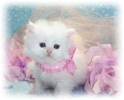 Image result for multiple pics of cute cats