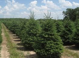 <b>High</b>-<b>Quality Wholesale &</b> Nursery Trees