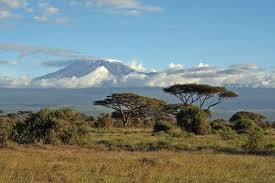 Image result for characteristics of savanna climatic condition