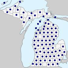 Hieracium aurantiacum - Michigan Flora