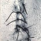 Infliction album by Scheer