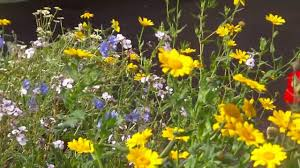 Small Picture Wildflower Garden Design for Bees Pollinators YouTube
