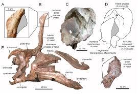 Tsintaosaurus - Wikipedia