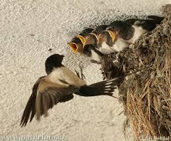 Ποιο πουλί δεν μπορεί να πιάσει ο κυνηγός;