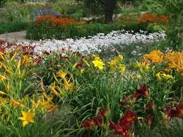 Small Picture Perennial Garden Design Ideas DIY