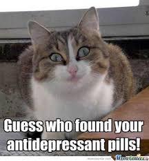 Memes Vault Happy Cat Memes via Relatably.com