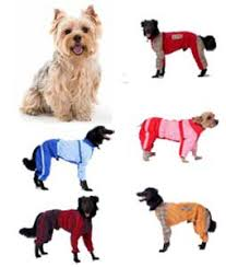 <b>Комбинезон Тузик</b> для собак йорк№2 породы <b>йоркширский</b> ...