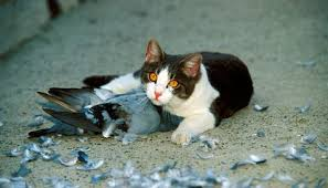 The Moral Cost of Cats   Science   Smithsonian Magazine