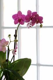 indoor flowering plants for office best low light office plants