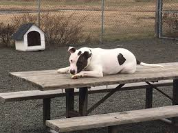 matt mcfarland latest news breaking headlines and top stories in tonight 6 he s called a kennel home for nearly 3 years but wallingford s
