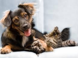 Αν τα ζώα μπορούσαν να μιλήσουν, πώς θα ήταν;