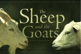 Image result for sheep and goats + images
