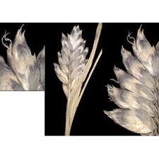 Genere Oreochloa - Flora Italiana