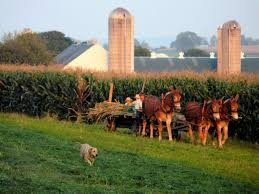 the amish a potential sustainable living model impakter amish 1