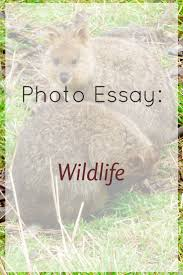 wildlife conservation essays  wildlife conservation essays