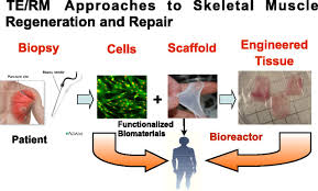 the pharmacology of regenerative medicine pharmacological reviews figure
