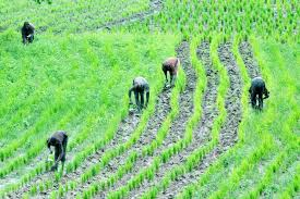Image result for Rice farmers seek total ban on sale of foreign rice in Nigeria