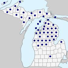 Abies balsamea - Michigan Flora
