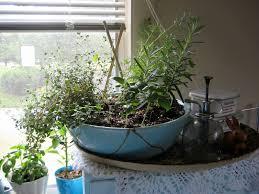Kitchen Windowsill Herb Garden Herb Garden For Sunday Morning