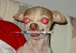My dog ate my adderall   mylasemag       s soup