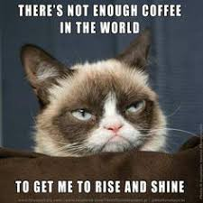 Cattitude Personified on Pinterest | Grumpy Cat, Grumpy Cat Meme ... via Relatably.com