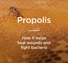 Image result for propolis pictures