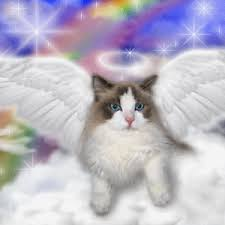 Image result for free angel cat image