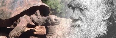 Resultado de imagen de la tortuga de darwin