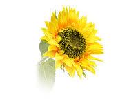 <b>Искусственные растения</b> для дома и улицы <b>Green Belt</b> — купить ...
