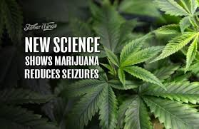 Image result for cannabis for epilepsy