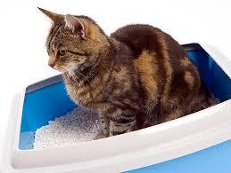 where should my litter box go cat litter box
