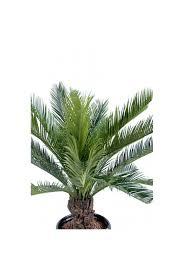 Artificial <b>Cycas Palm</b> (2 Sizes) The <b>Artificial Plants</b> Shop