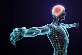 Imagini pentru Corpul uman,